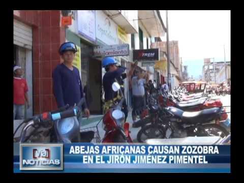 Abejas africanas causan zozobra en el jirón Jiménez Pimentel