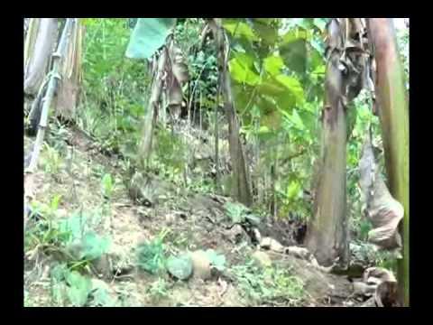 Reforestan zona con la finalidad evitar erosión de suelo en la banda