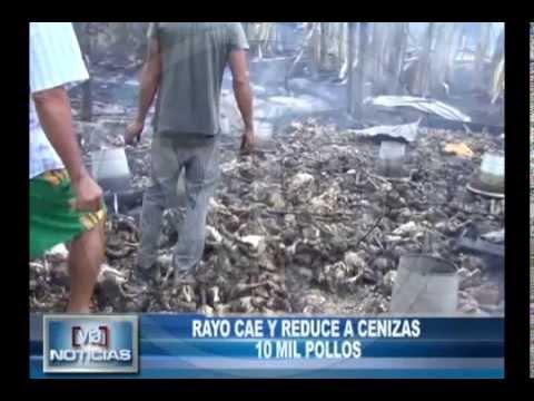Rayo cae en granja avícola y reduce a cenizas  10 mil pollos