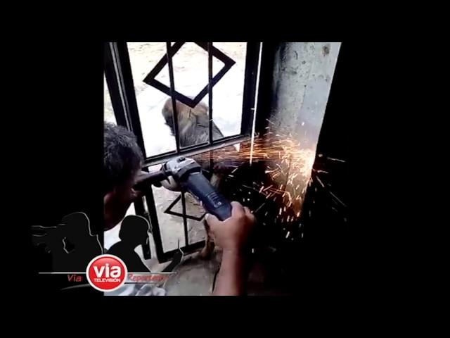 Tarapoto: Rescatan a perrito que quedó atrapado en una puerta de fierro