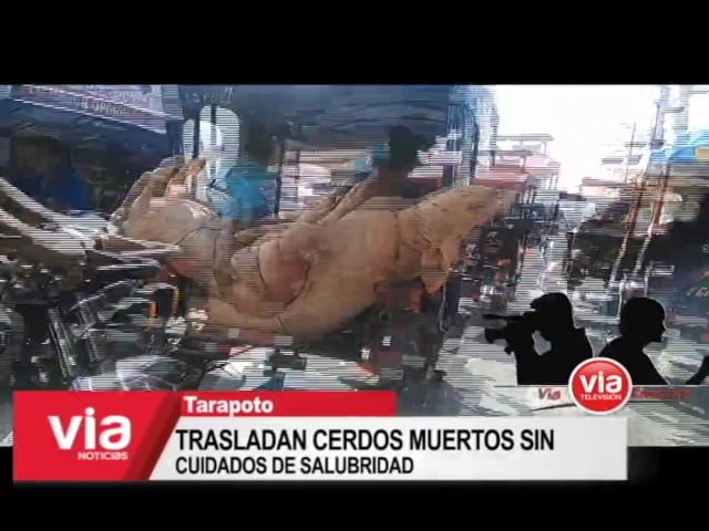 Trasladan cerdos muertos sin cuidados de salubridad en Tarapoto