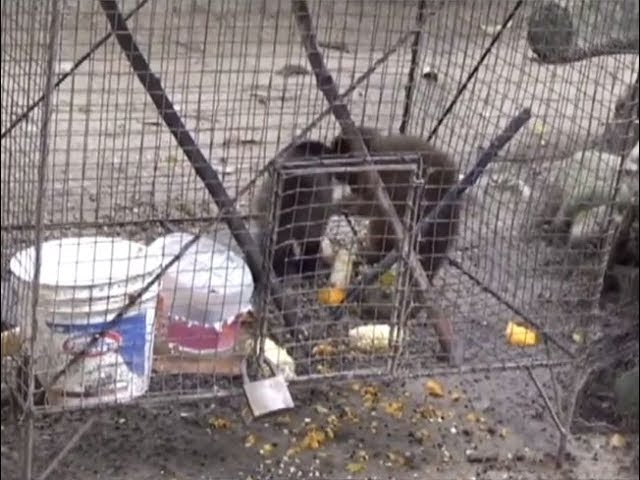Autoridades viene trabajando para conservar fauna silvestre del país