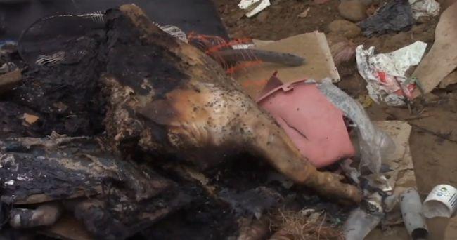 Carne de chancho en descomposición es abandonado en el jirón Atahualpa