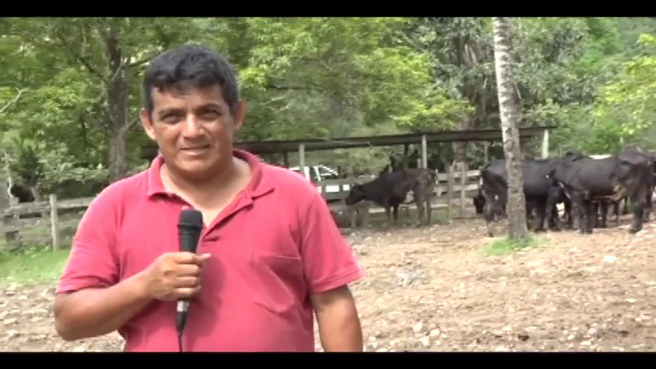 Opiniones sobre plan ganadero de la región San Martín