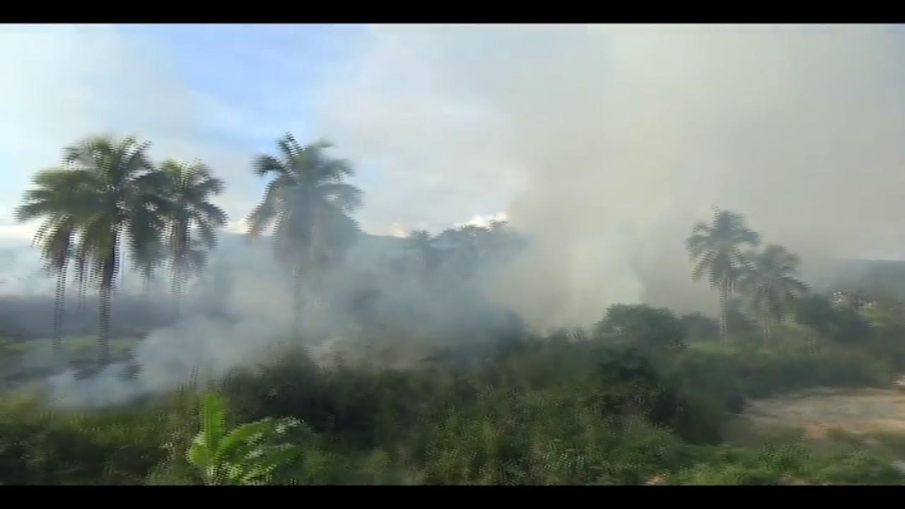 Incendio forestal causa alarma en La Banda de Shilcayo