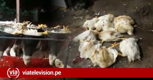 La Banda de Shilcayo: sancionan a empresa avícola  con 50% de una UIT