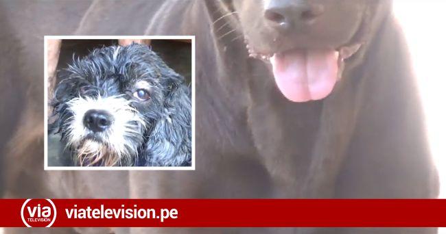 Tarapoto: dueño de can responde acusaciones tras denuncia pública de su vecina