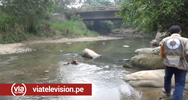 ANA y OEFA visitan almidonera que vierte aguas residuales a quebrada Ahuashiyacu