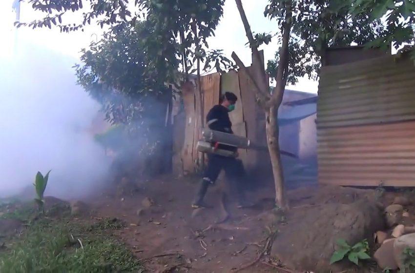 Encuentran más criaderos de zancudo transmisor del dengue en provincia de San Martín