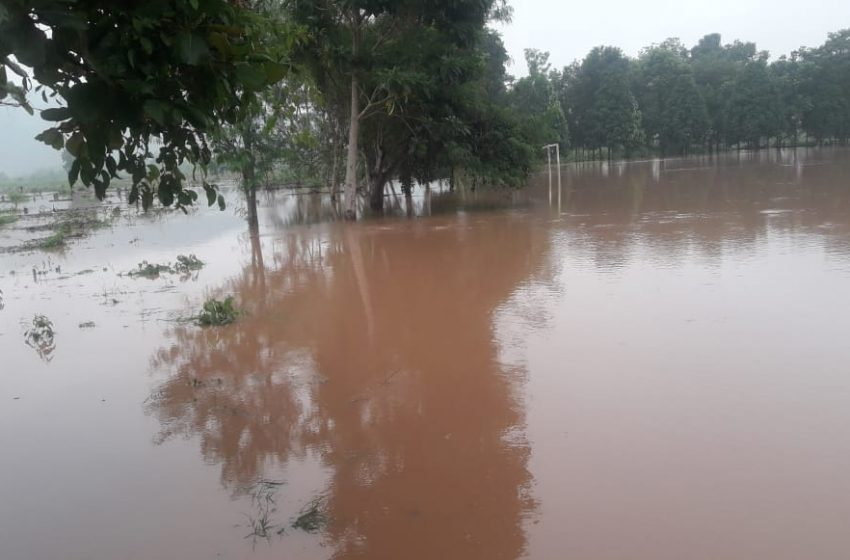 Bellavista: desborde del río Biavo afecta a varias hectáreas de sembríos de arroz