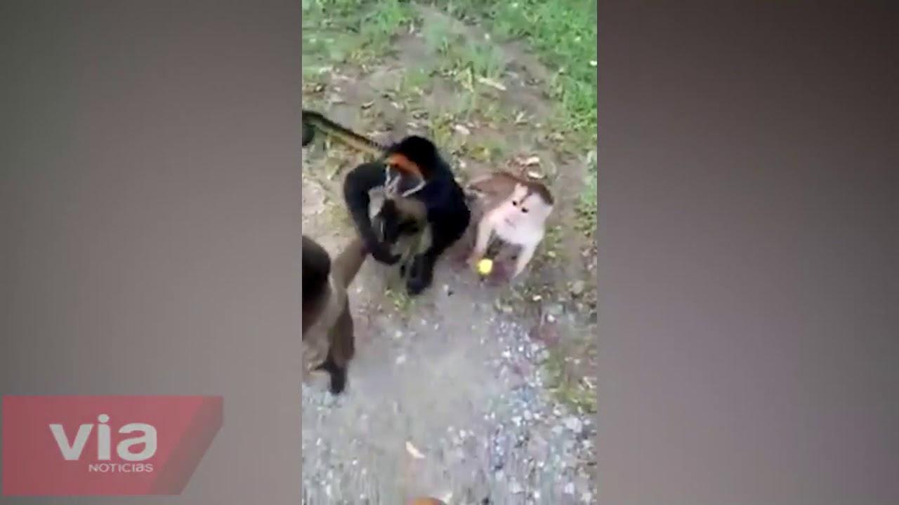 San Martín: monos aparecen en la carretera Tarapoto – Yurimaguas