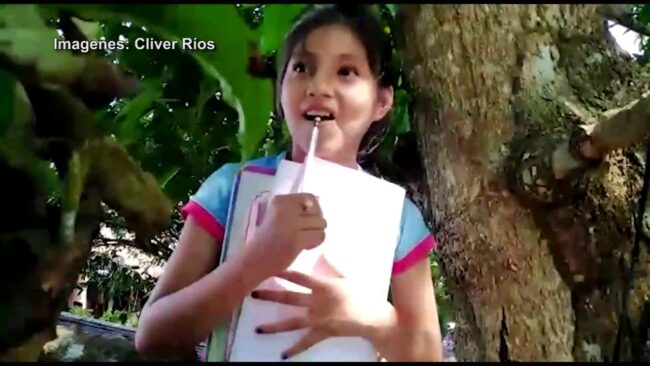 Pelejo – San Martín: niña trepa árbol para poder estudiar