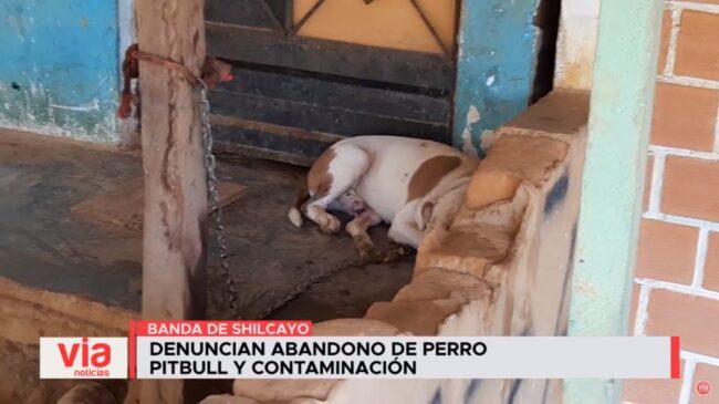 Denuncian abandono de perro pitbull y contaminación